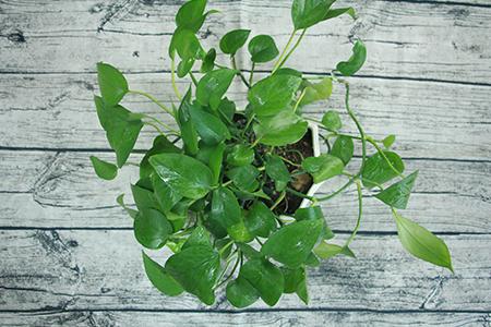 盆栽盆里放多少土合适
