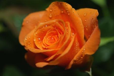 玫瑰多少天浇一次水