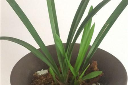 兰花用什么肥料,怎么施肥插图(2)