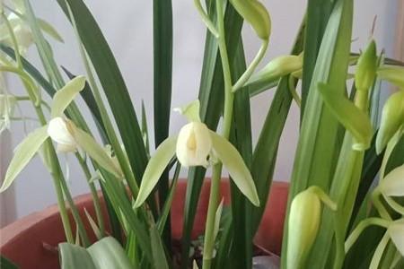 兰花用什么肥料,怎么施肥插图(3)