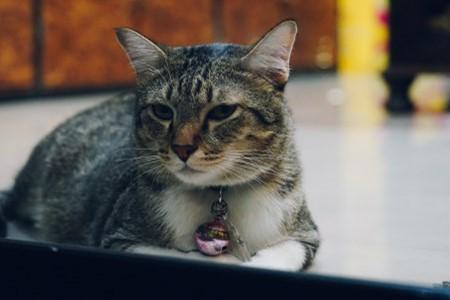 绿萝是不是对猫有毒,猫能不能闻绿萝插图(2)