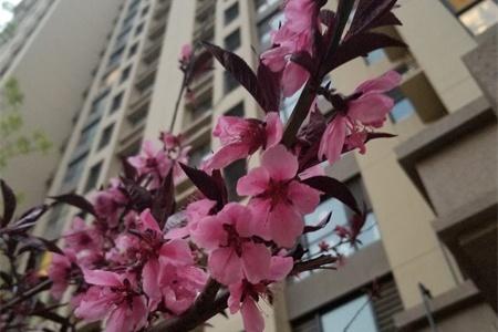 杭州适合养什么花插图(1)