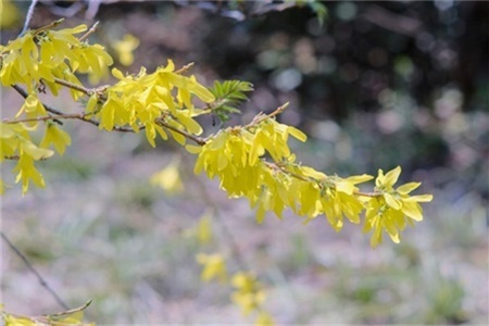 伊春适合养什么花,市花和市树是什么插图(1)