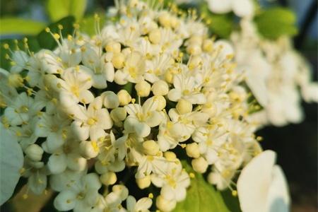 扬州适合养什么花,市花和市树是什么插图(1)