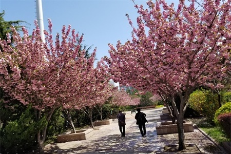 武汉适合养什么花,市花和市树是什么插图(3)