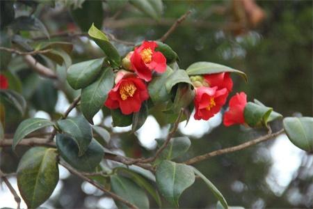 徐州适合养什么花,市花和市树是什么插图(1)