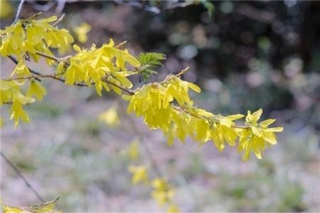 淮安适合养什么花,市花和市树是什么插图(2)