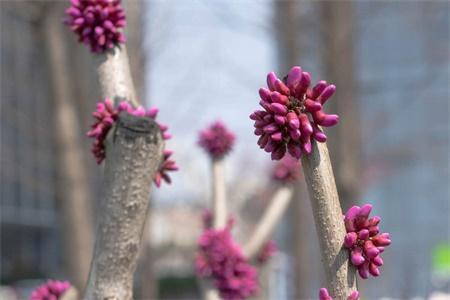 北海适合养什么花,市花和市树是什么插图(1)