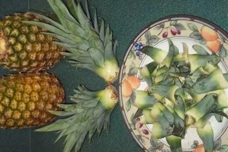 菠萝头怎么种水培插图(1)