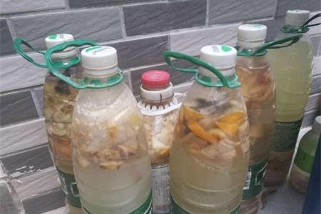 果皮怎么发酵做肥料插图(3)