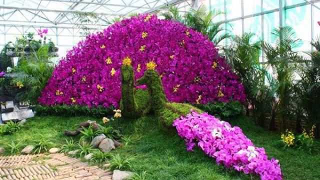 蝴蝶兰怎么多开花