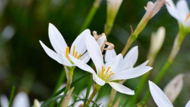 水仙花养护小知识