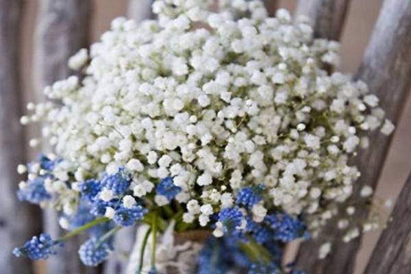 满天星花的花�_满天星的花语是什么-花百科