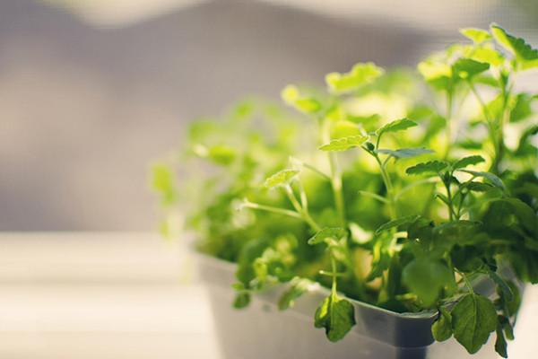 办公室绿植摆放助旺事业运