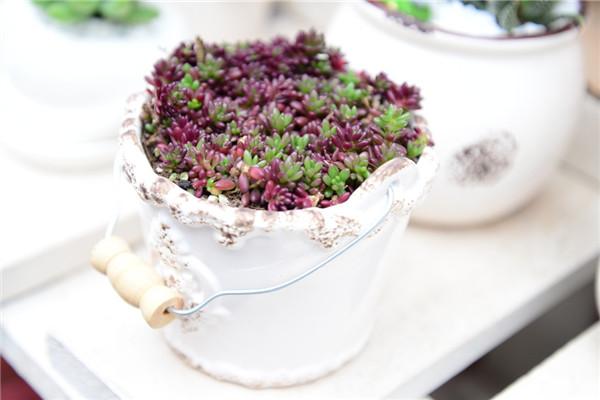 紫米粒长了介壳虫怎么办