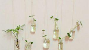 水培植物有哪些特点