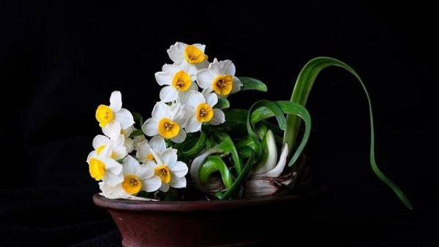 让水仙花春节开花的方法
