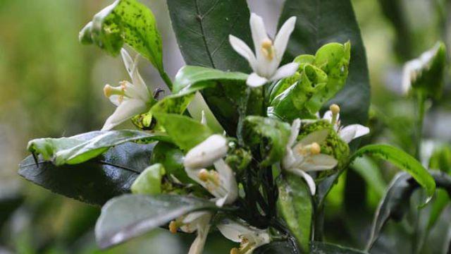 盆栽花卉病虫害有哪些