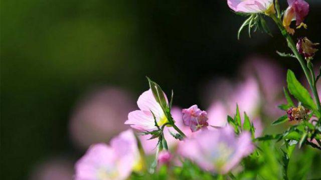 夏天能给花施肥吗