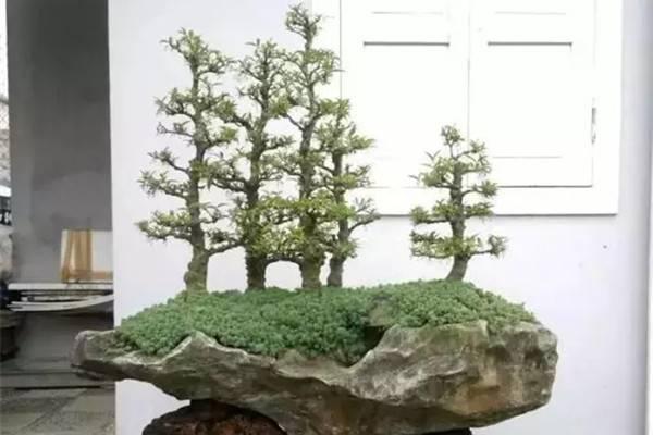 丛林式的盆景艺术,亮瞎了