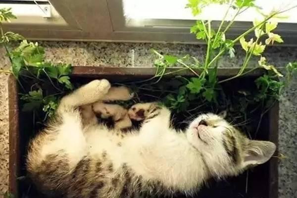 宠物与花草间的相爱相杀,笑哭啦