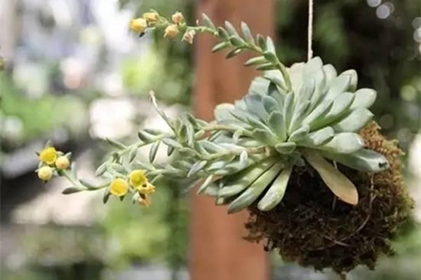 不用花盆也能养植物,真是省了不少钱