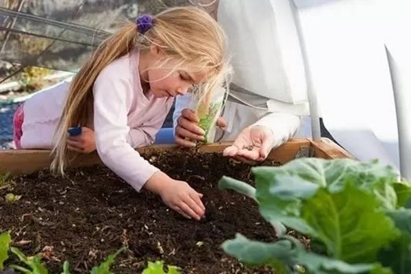 这些小技巧能够帮你提高花卉种子的发芽率