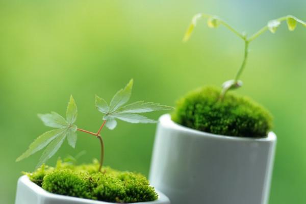 19种植物的摆放位置,让家人更健康
