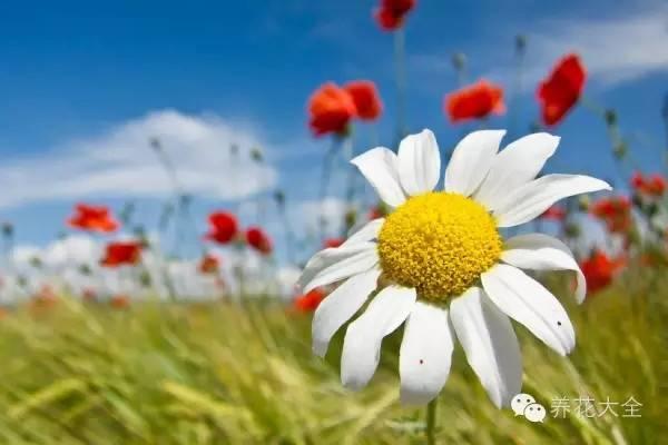 超强花卉害虫识别、防治攻略