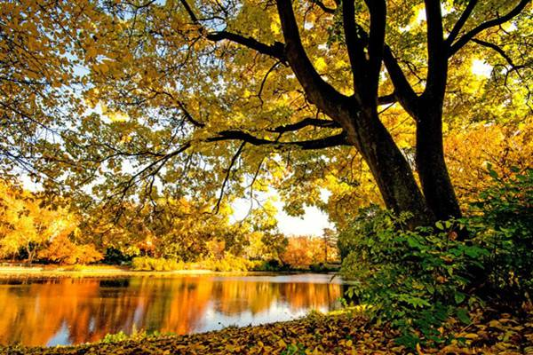 秋季养花的施肥方法