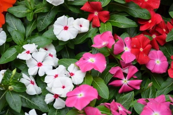 要想大富大贵,就养这些花