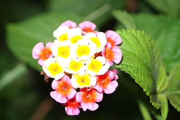 花卉颜色居然对风水也有影响