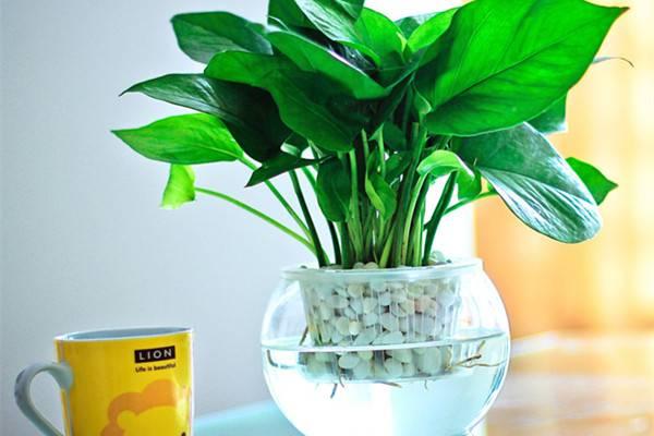 这21种植物,天生就是装修污染物的克星