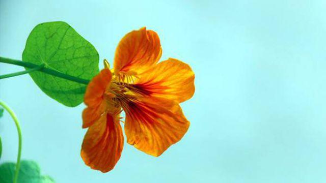 不同种类的花卉如何追肥