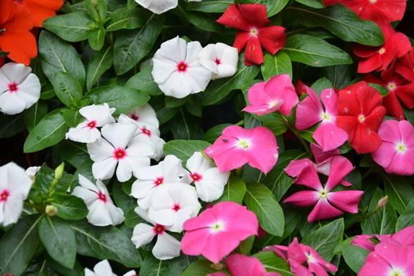 这8种花躺着就能养好,一点都不费事