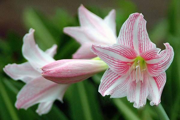 这7种植物能改善你的家居风水
