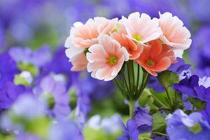 这11种常见花卉也能叶片扦插
