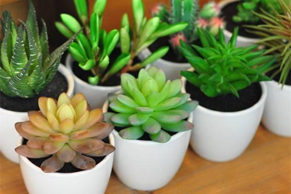 8款适合摆放在卧室的吸毒植物,让你越来越健康