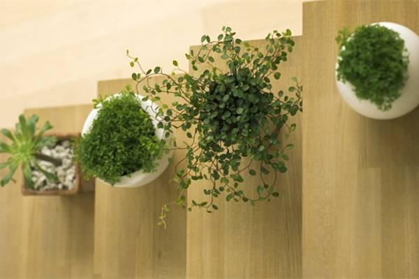 观叶、观果又赏花,50种室内植物任你选