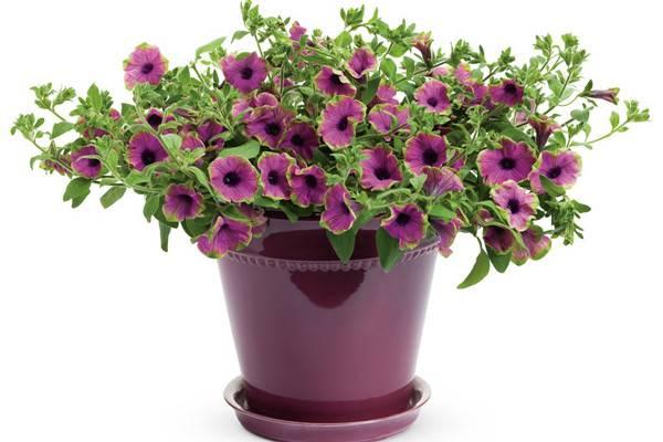 这8种花,一开就开半年,太过瘾了
