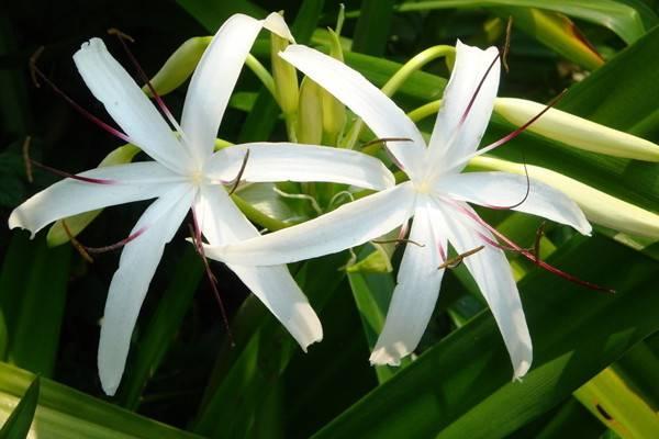 随便掐个枝都能养活的9种花,不用管就能爆盆