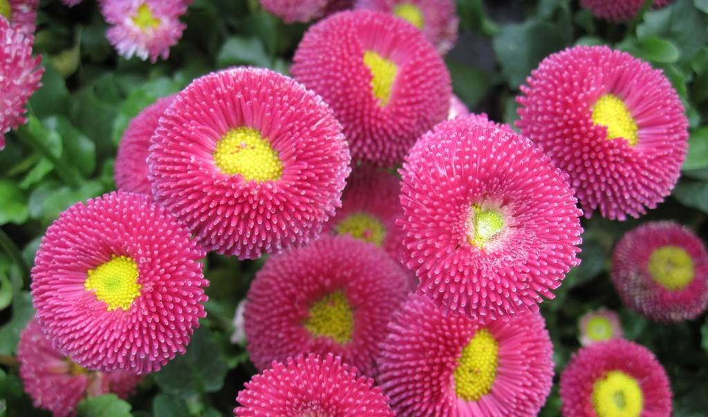 6种花让你365天都有花赏