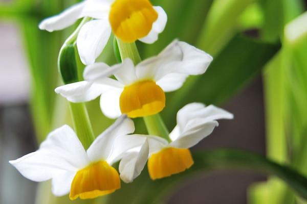 别看这8种花朵小,美丽可一点都
