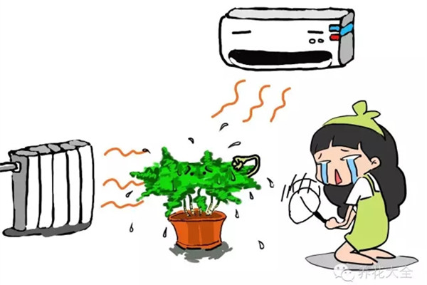 暖气空调房,再不喷水,这些植物就干死了