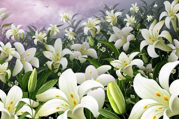 百合花的常见品种
