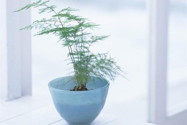 吊兰文竹发财树...这么好养的花,为啥你都养死