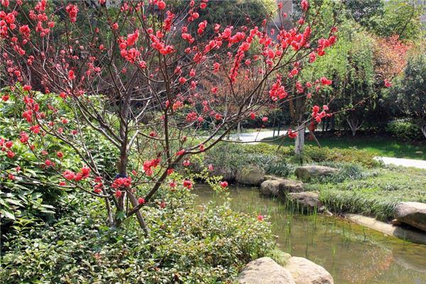 碧桃常见虫害及其防治