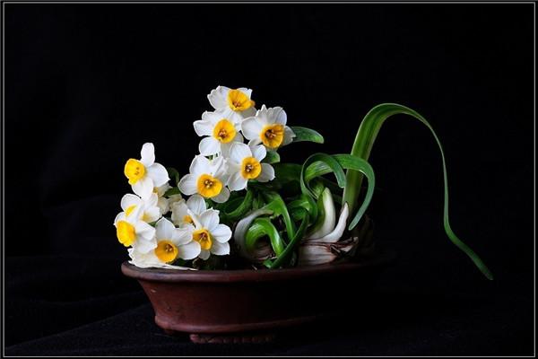水仙花的风水作用