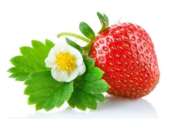 草莓的虫灾防治