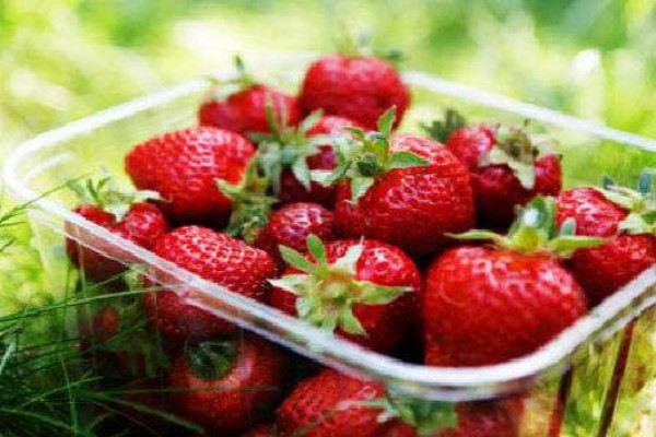 家庭无土栽培草莓怎么养